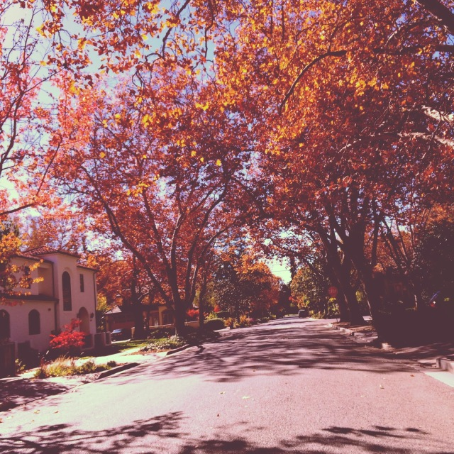 Fall in California, Leaves changing for Fall, Fall leaves, Palo Alto in the Fall, Palo Alto neighborhoods